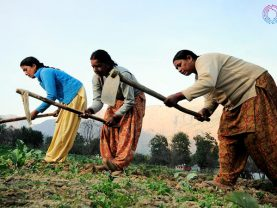 Harnessing agriculture as a tool of women empowerment